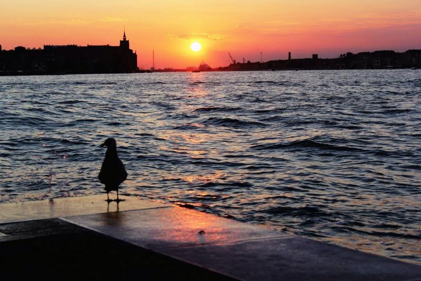 Venice in aNutshell